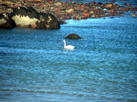 swan, the promise 365, jamie eslinger