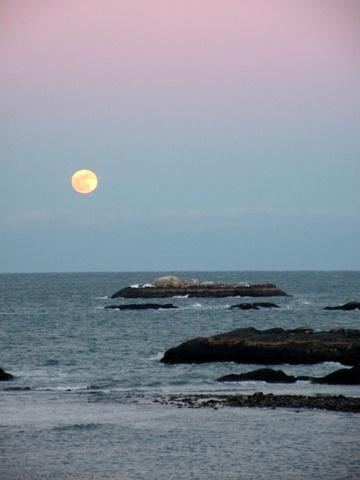 full moon wolf, jamie eslinger, the promise 365