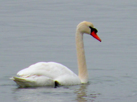 swan, jamie eslinger, the promise 365