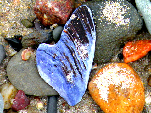 heart shell, beach, jamieeslinger, thepromise365, thepromisedaily.com