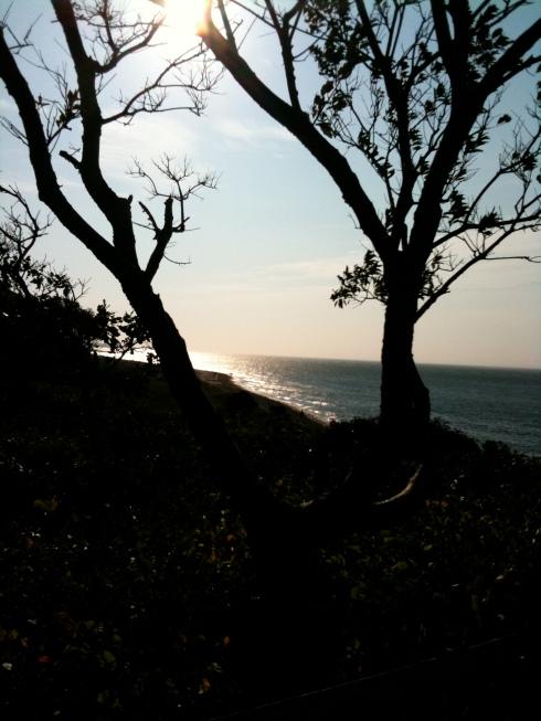 trees, jamie eslinger, the promise 365, thepromisedaily.com